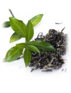 画像1: グリーンティー(緑茶)Abs3ml・精油